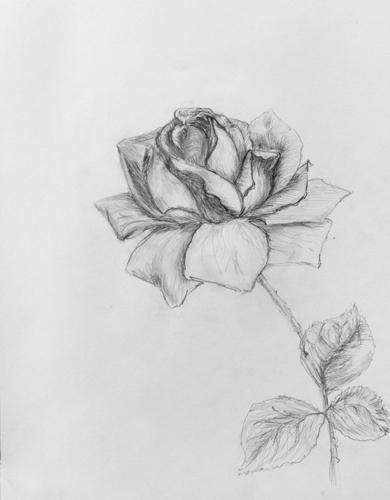 Как нарисовать рокси поэтапно